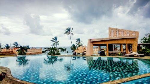 アフリカ, ケニア, ホテルプール, ヤシの木とスイミングプールの無料の写真素材