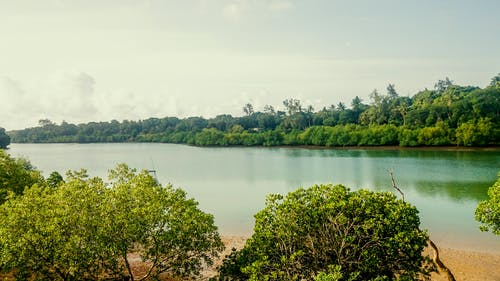 アフリカ, アフリカインド洋の小川, ケニア, ムトワパの無料の写真素材
