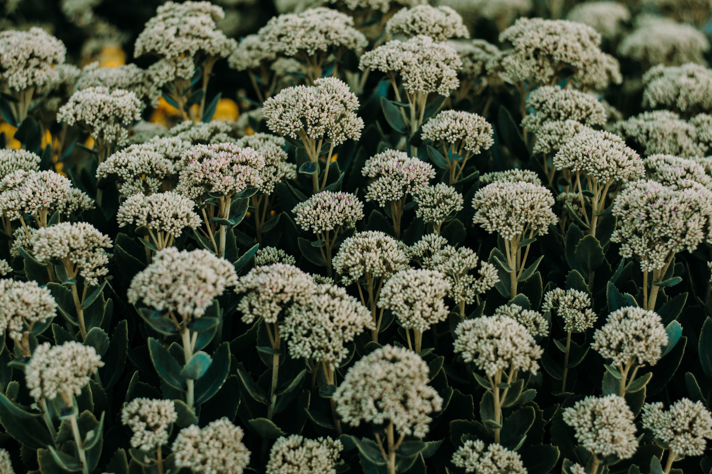 Foto d'estoc gratuïta de atmosfèric, bonic, botànic, camp