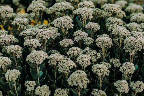 Základová fotografie zdarma na téma atmosférický, atmosférický večer, barva, botanický