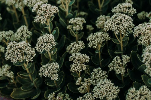 Základová fotografie zdarma na téma barva, botanický, flóra, HD tapeta