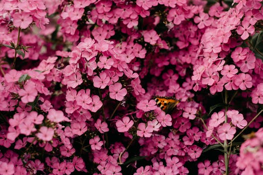 1000 interesting pink flowers photos pexels free stock photos close up photography of pink flowers mightylinksfo