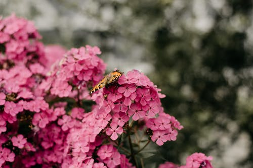 Selective Focus Photography of Butterfly Perched on Flowers