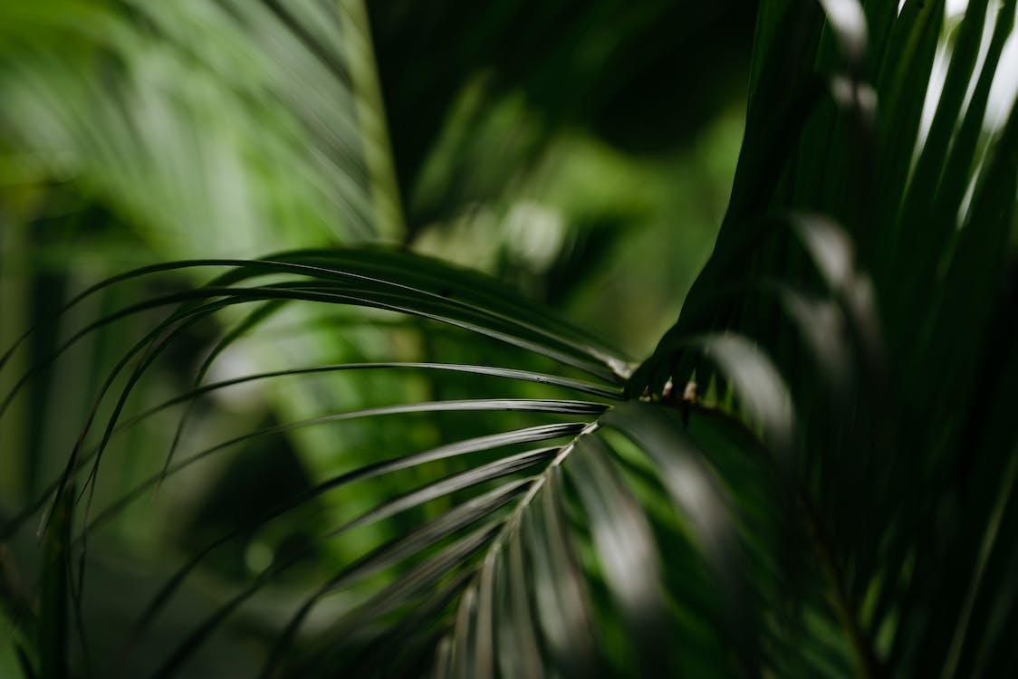 คลังภาพถ่ายฟรี ของ การเจริญเติบโต, ความชัดลึก, ต้นไม้