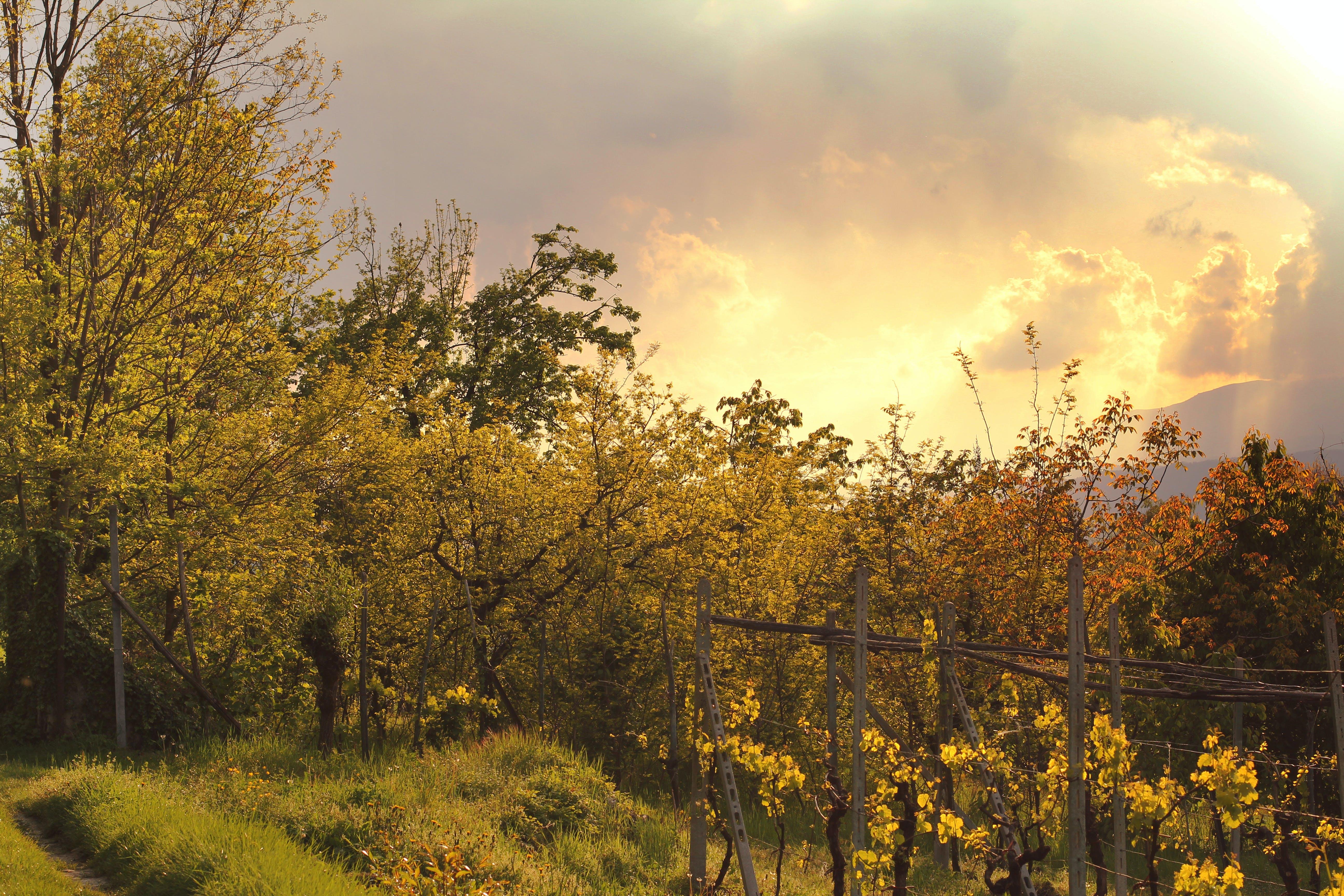 Foto profissional grátis de árvores, nublado, nuvens, plantas