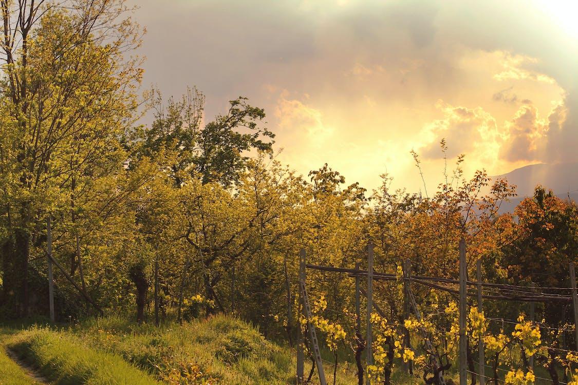 деревья, заводы, облака