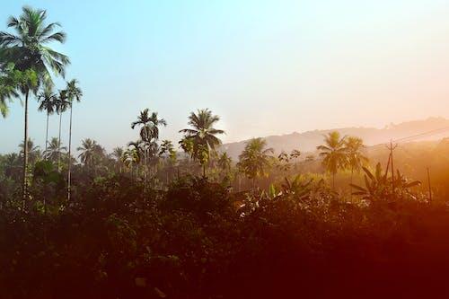 Kostnadsfri bild av klar himmel, kokospalmer, morgonsol, soluppgång