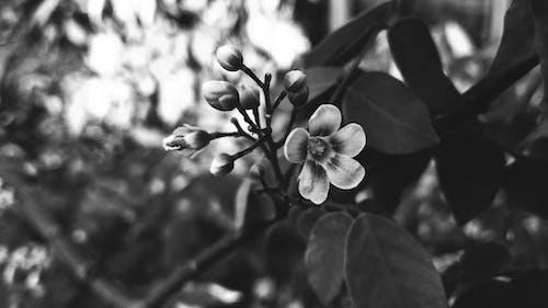 꽃의 회색조 사진