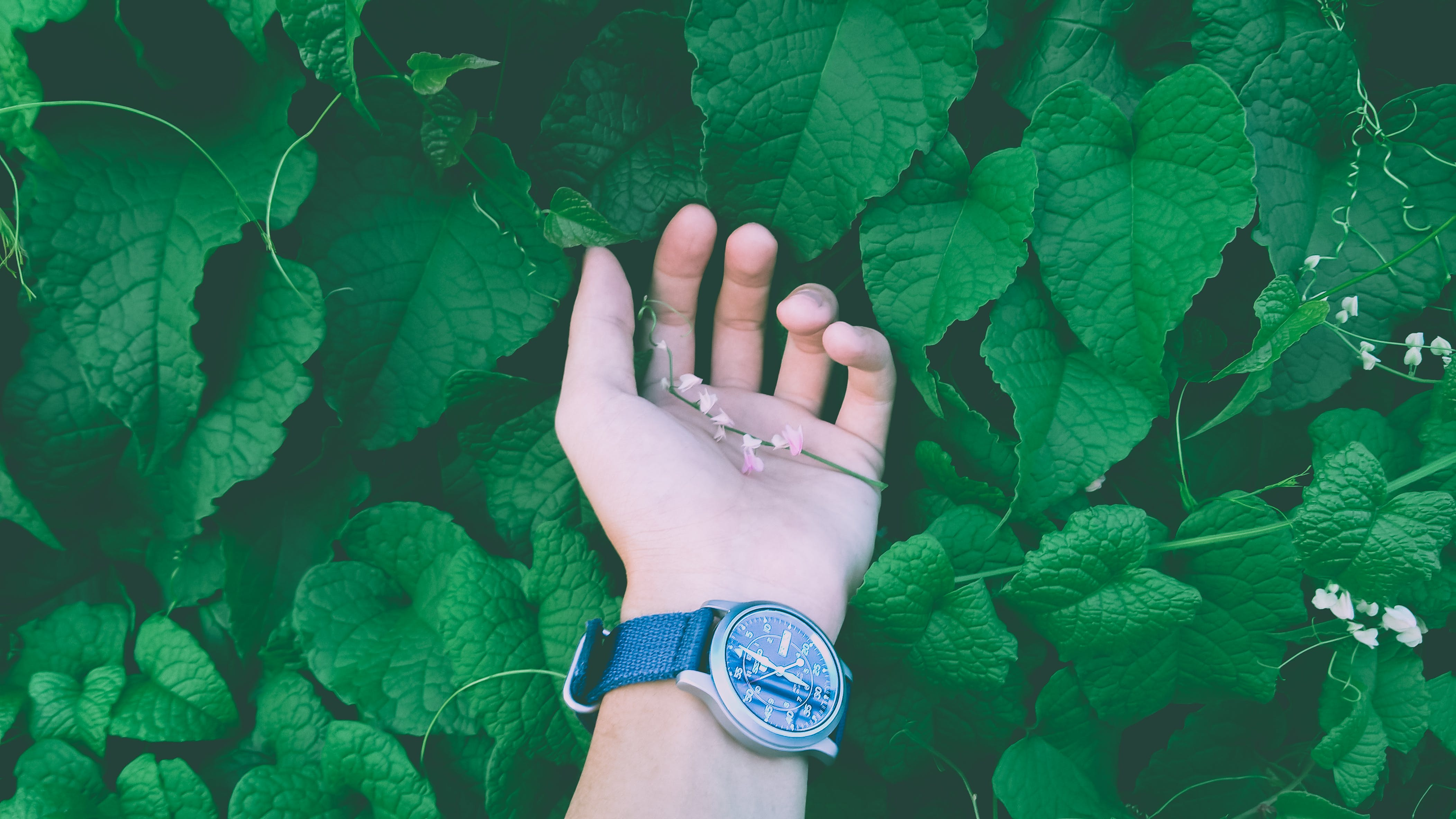Close Up Photo of a Person Wearing Wristwatch