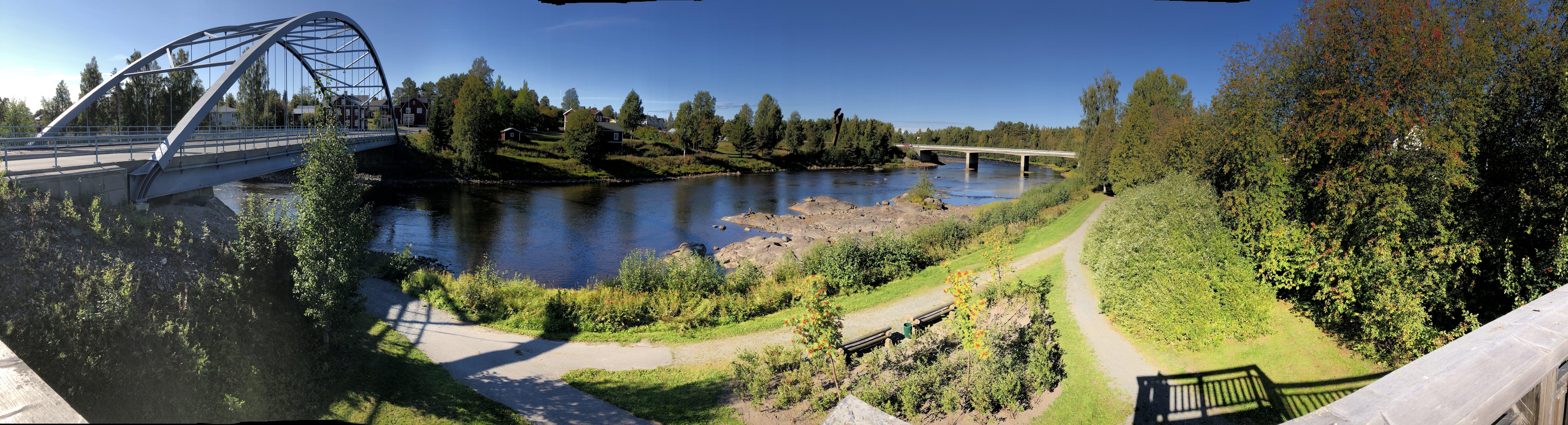 Free stock photo of river, salmon, Byske