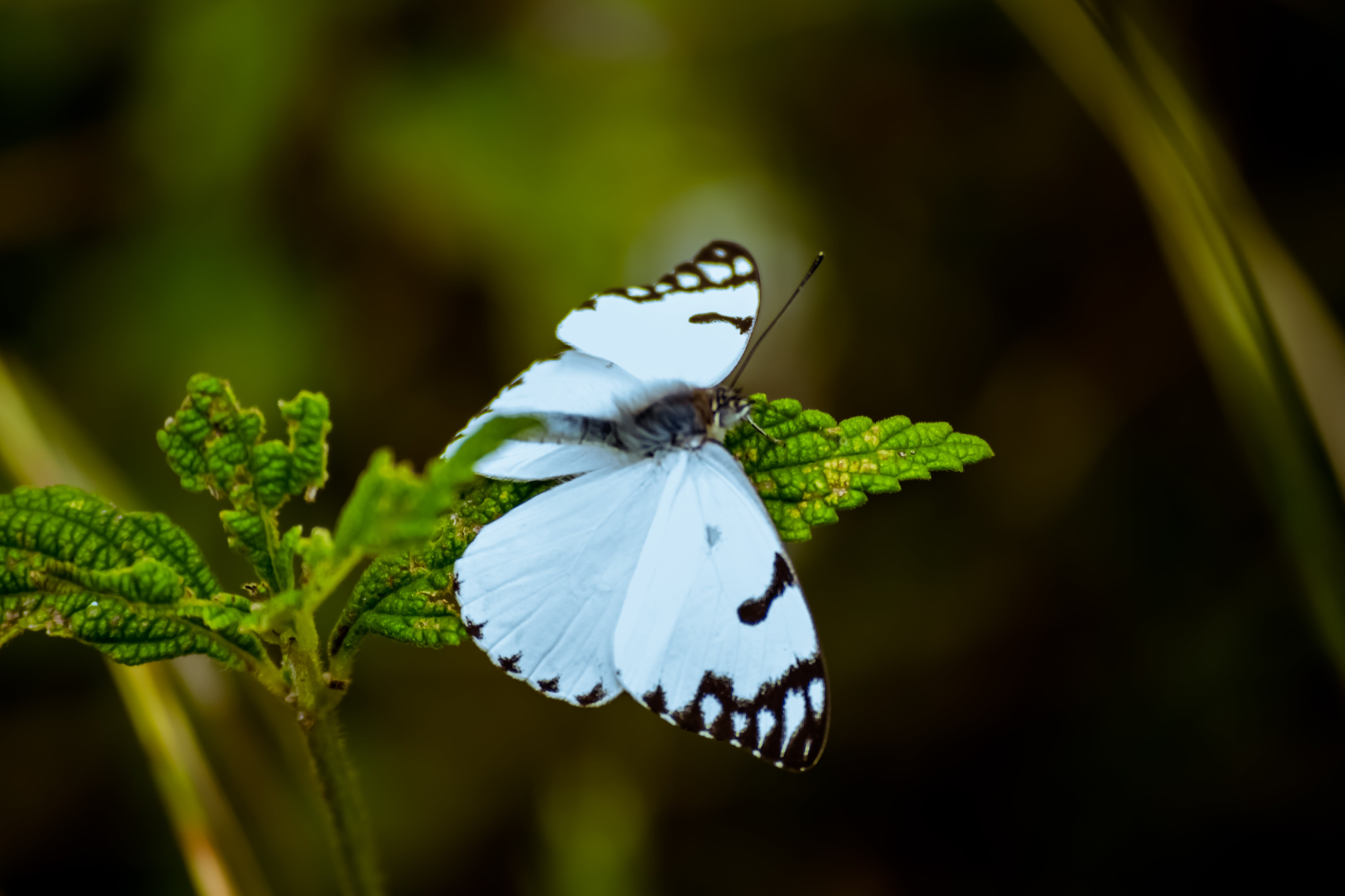 White And Black Butterfly Perching On Green Leafed Plant