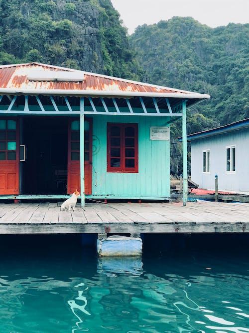 Kostenloses Stock Foto zu architektur, ha long bay, hund