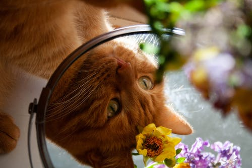 Close-up Photography of Orange Tabby Cat
