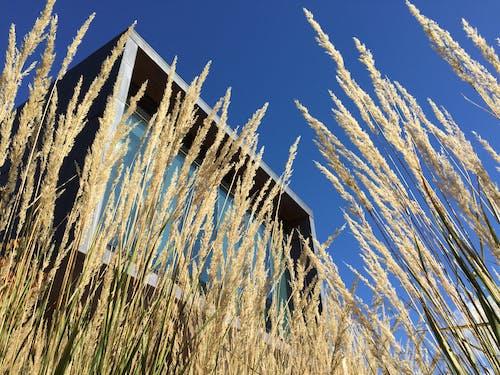 Základová fotografie zdarma na téma architektura, budova, pastvina, plodina