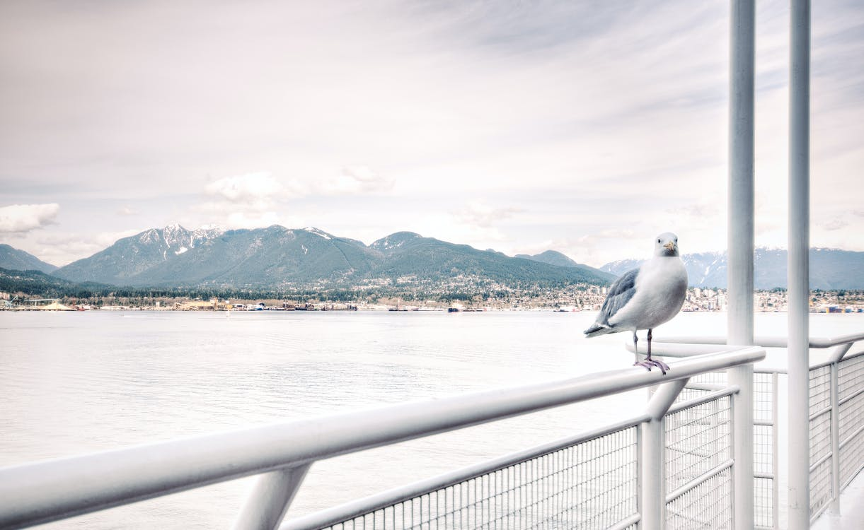 Ship View of White Bird on White Steel Rail during Daytime