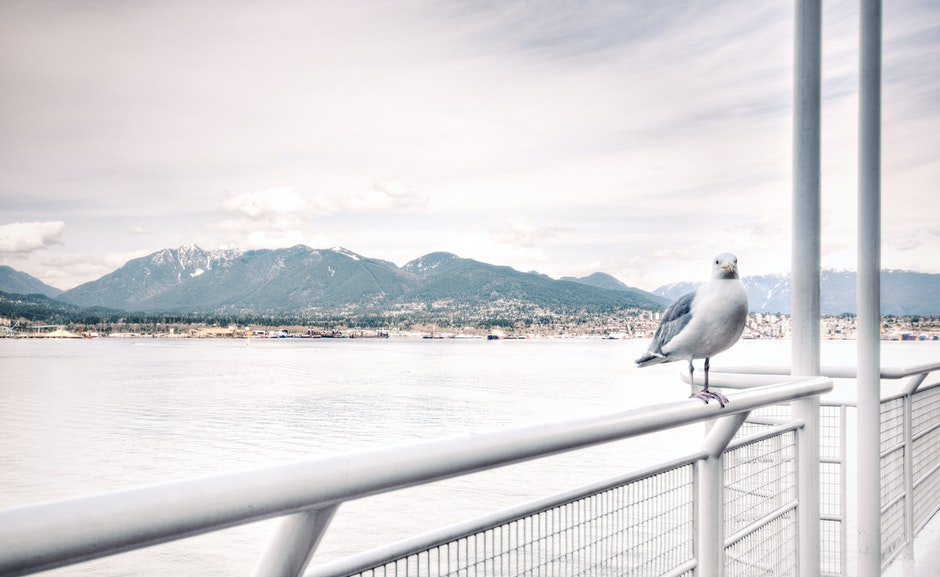 Ship View of White Bird on White Steel Rail during Daytime