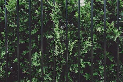 Fotos de stock gratuitas de acero, arbusto, cerca, jardín
