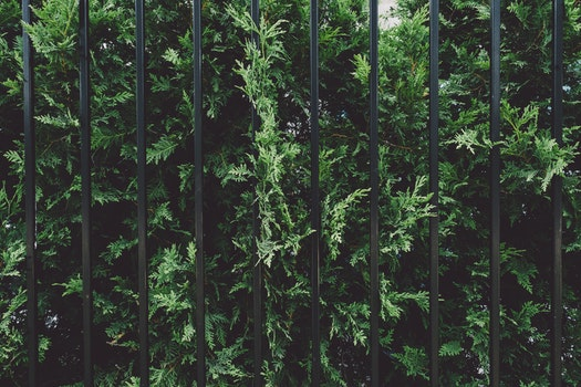 Free stock photo of shrub, garden, plant, fence