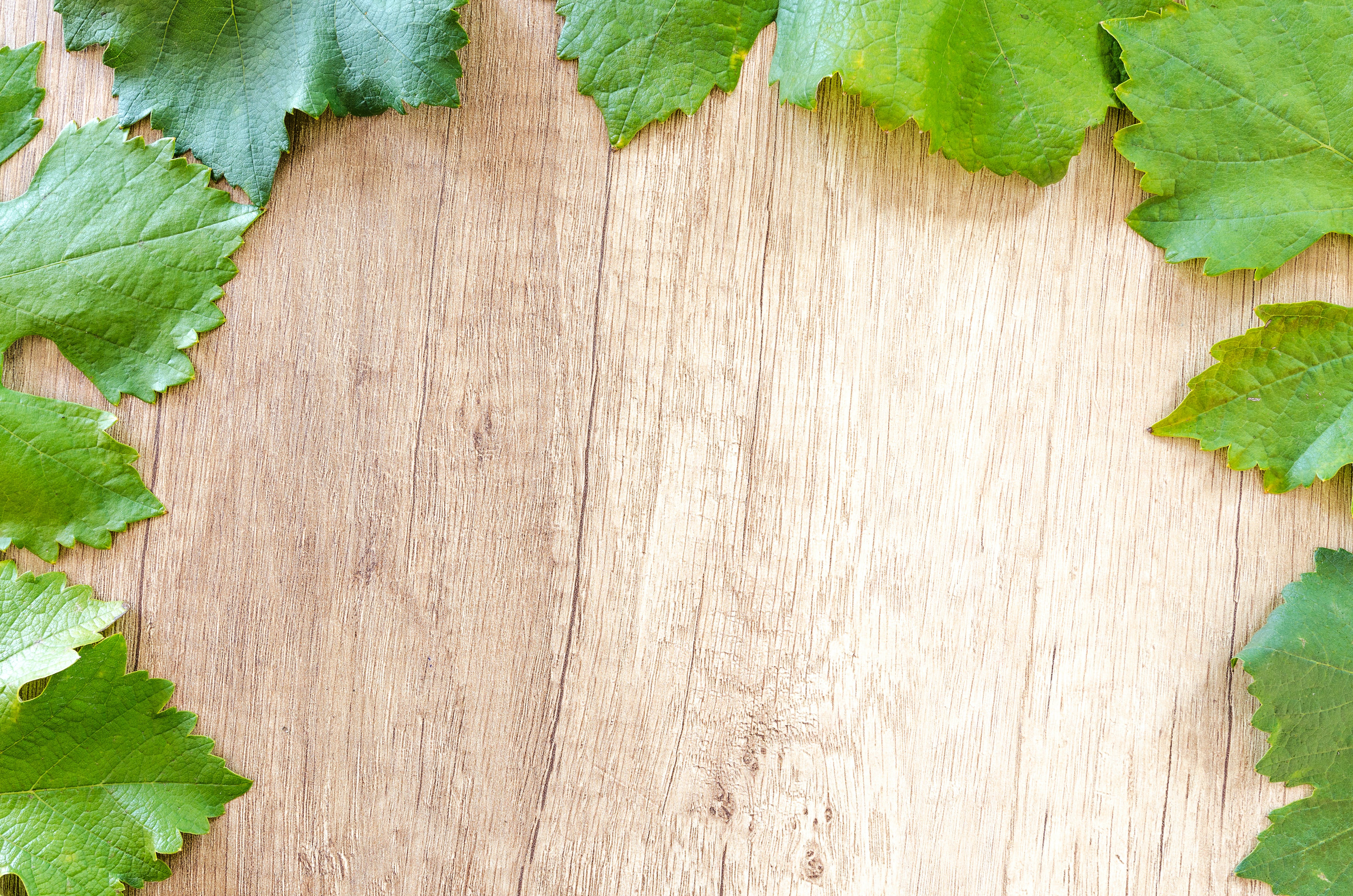Green Leaves On Wooden Surface