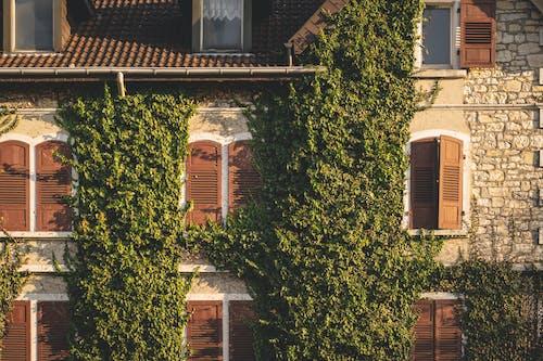 Brown Dom Z Zielonymi Roślinami
