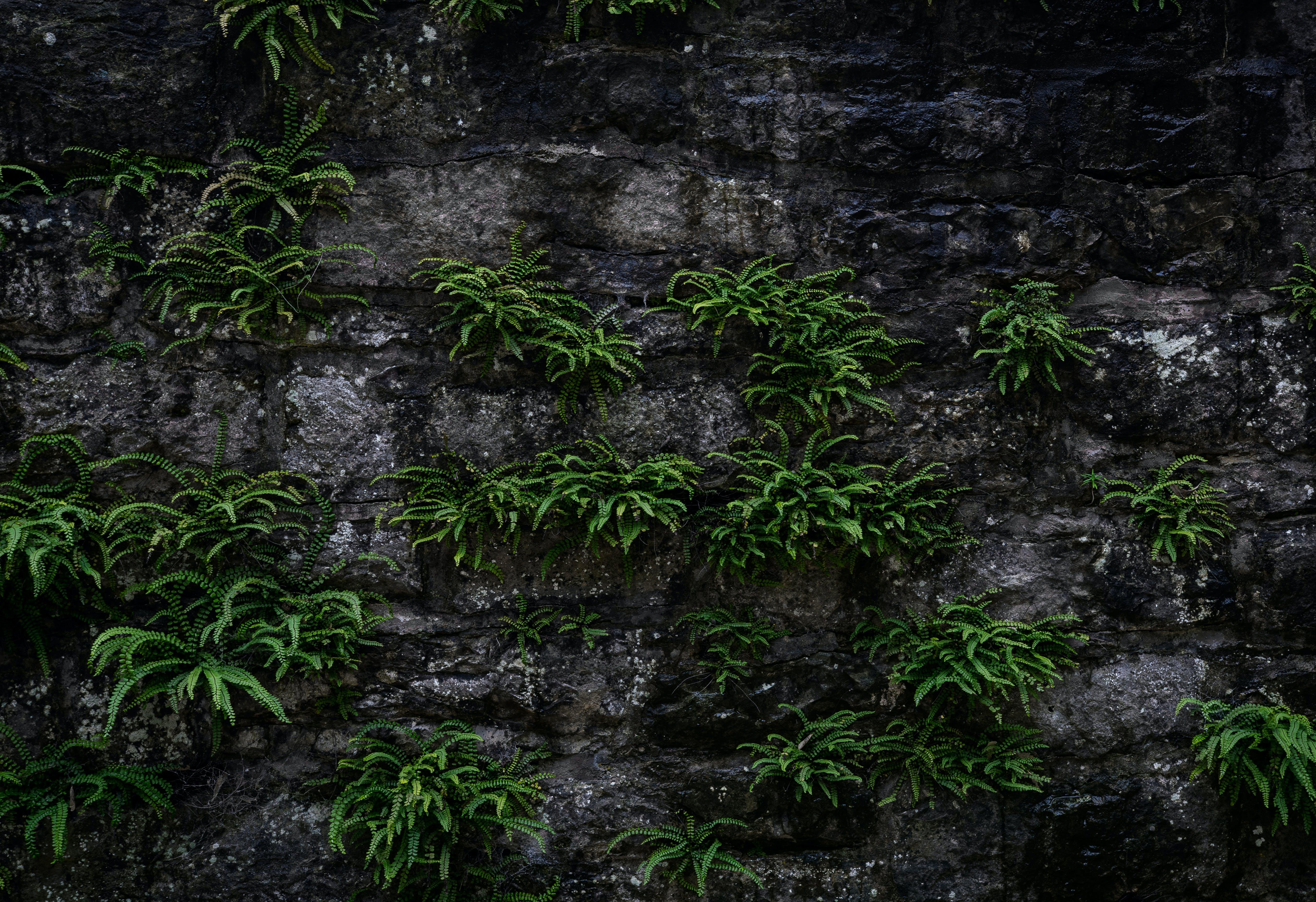 คลังภาพถ่ายฟรี ของ กลางวัน, การเจริญเติบโต, ทัศนียภาพ, ธรรมชาติ