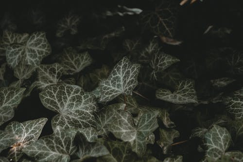 Macro Shot of Leaves