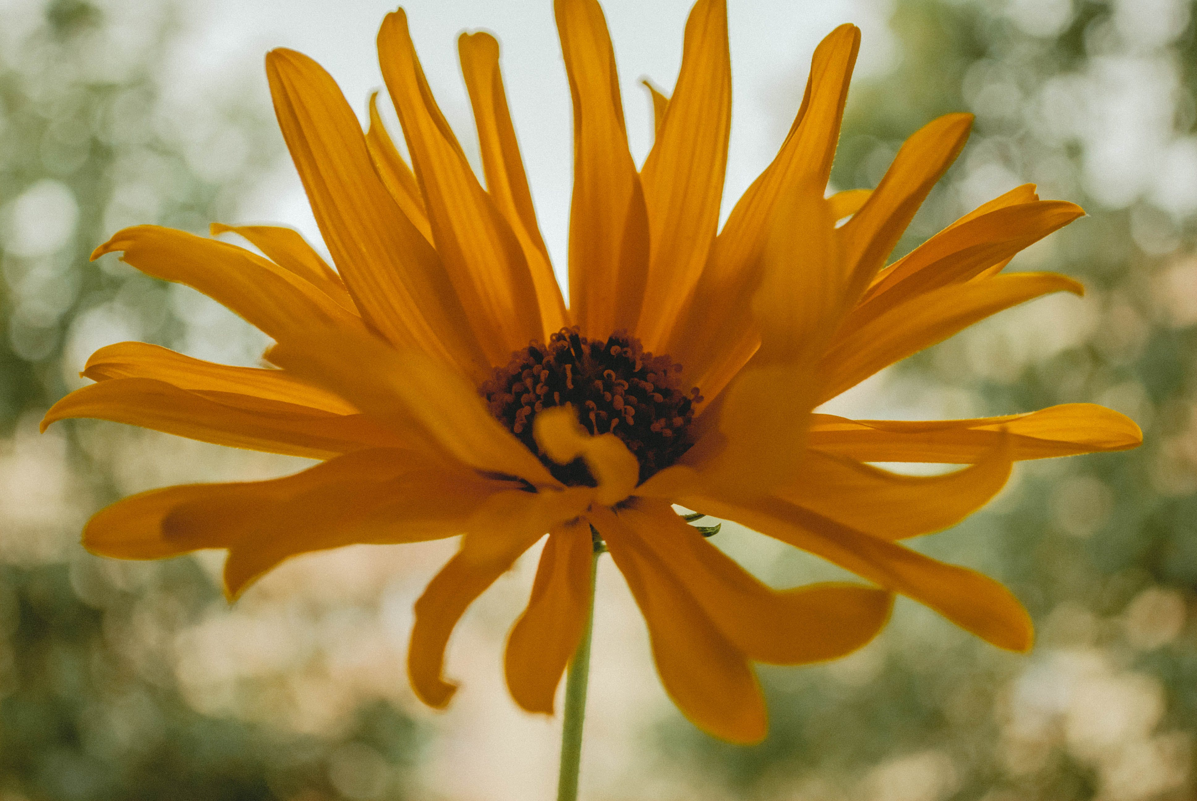 Closeup Photography of Yellow Petaled Flower