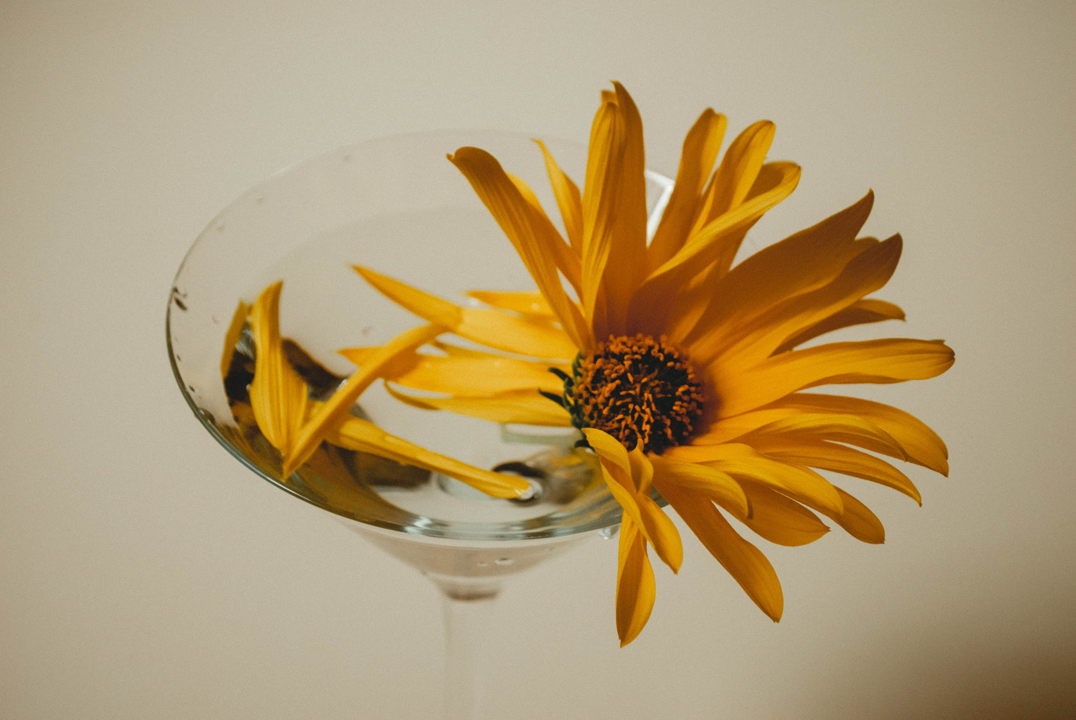 Yellow Petaled Flower on Clear Champagne Glass