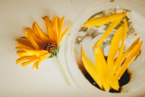 Δωρεάν στοκ φωτογραφιών με γκρο πλαν, γυαλί, κάτοψη, κίτρινη