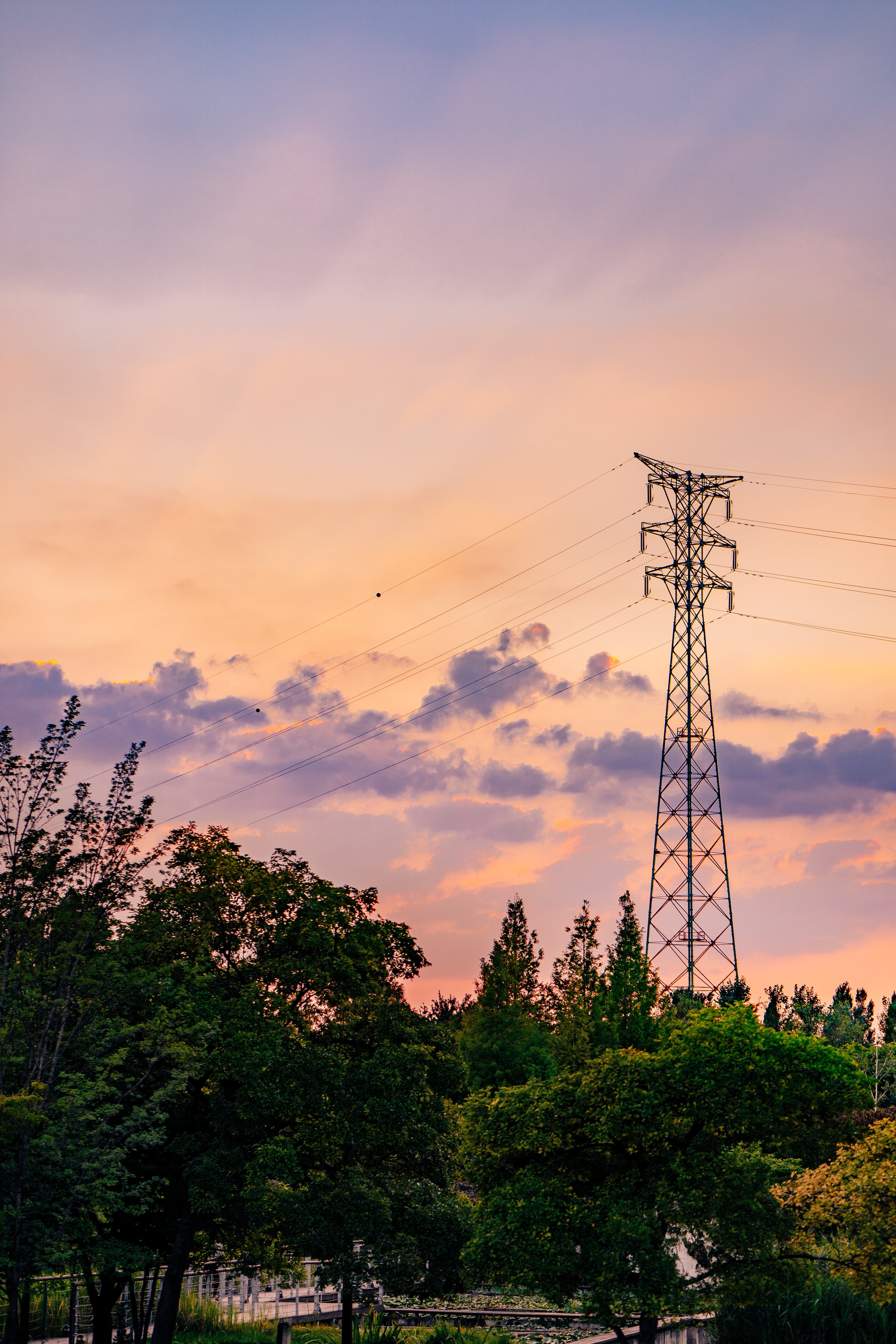 Landscape Photography of Trees Near Electricity Tower during Golden Hour