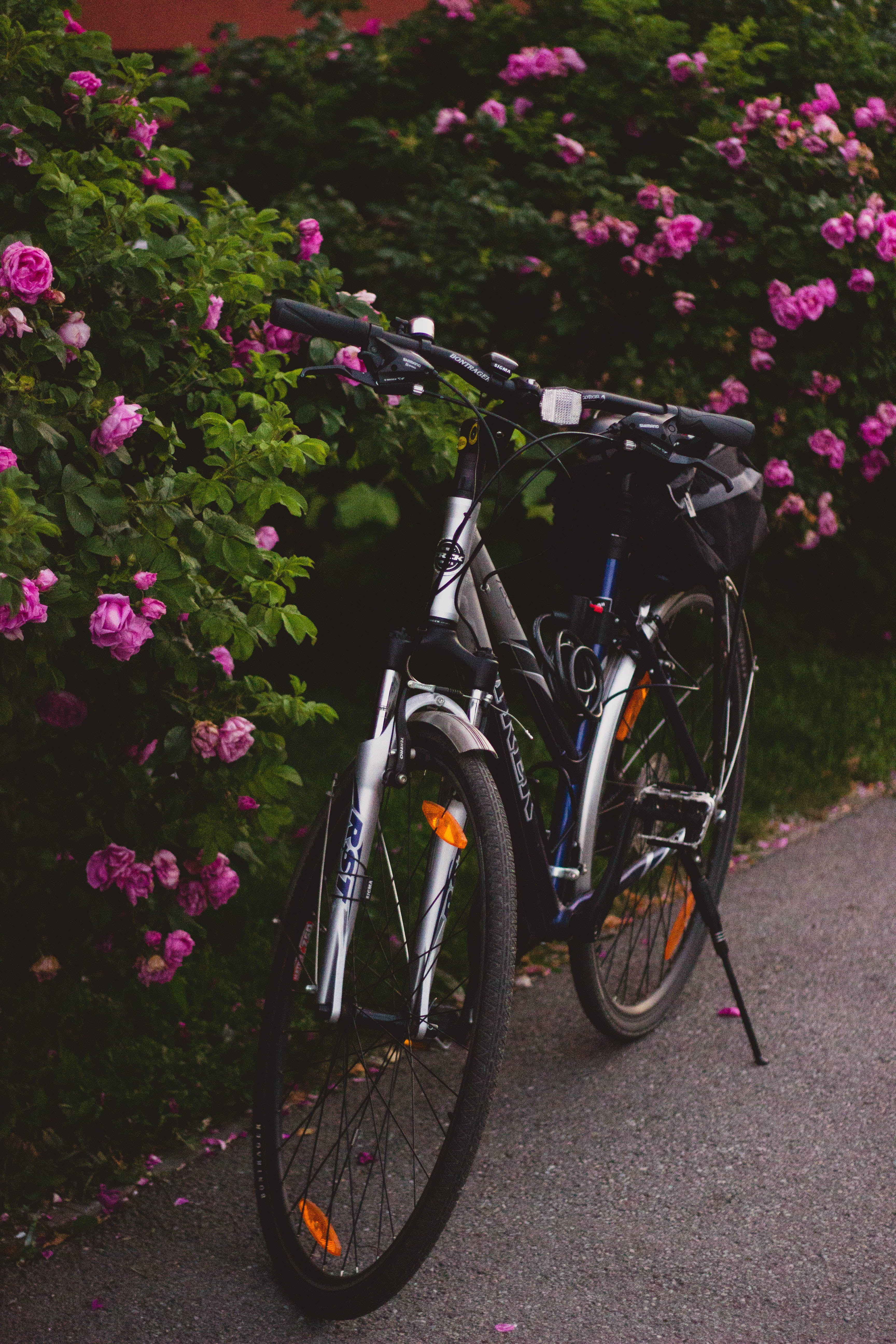 Gray and Black Hardtail Bike Beside Pink Flowers