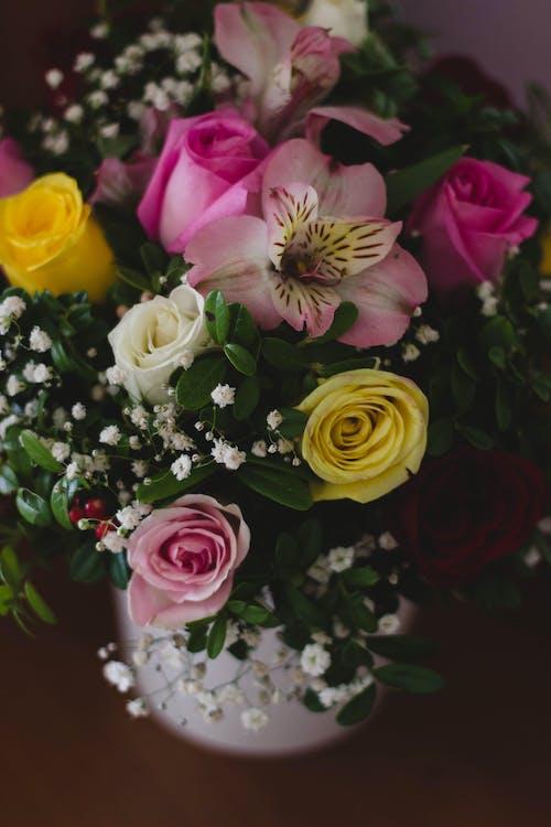 Foto profissional grátis de arranjo de flores, broto, decoração, flor