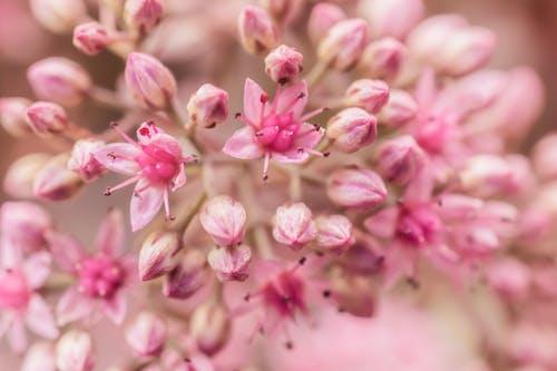 Bahçe, bitkiler, Çiçekler, makro içeren Ücretsiz stok fotoğraf