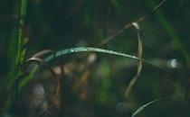 plant, leaf, raindrops