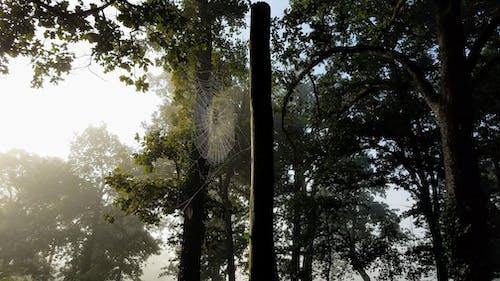 Ilmainen kuvapankkikuva tunnisteilla aamuaurinko, aamun valo, hämähäkinverkko, löytää hämähäkki