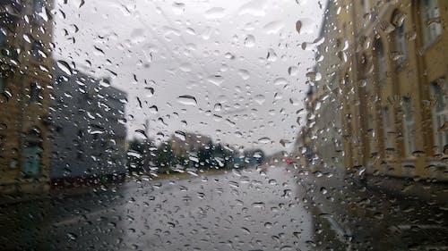 Základová fotografie zdarma na téma déšť, kapky, kapky vody, po dešti