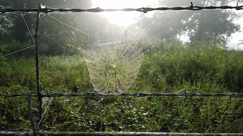 Ilmainen kuvapankkikuva tunnisteilla aamuaurinko, aamun valo, aita, laskea hämähäkkien verkot