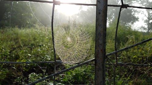 Ilmainen kuvapankkikuva tunnisteilla aamuaurinko, aamun valo, aitauspylväs, hämähäkinverkko