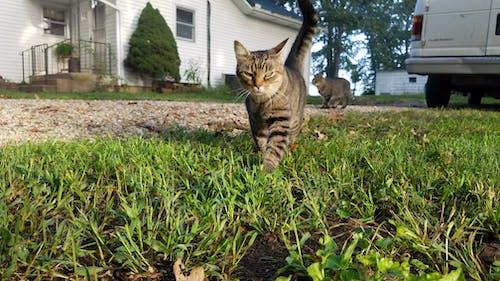 Ilmainen kuvapankkikuva tunnisteilla kissa, kissat, märkä ruoho, onnellinen kissa