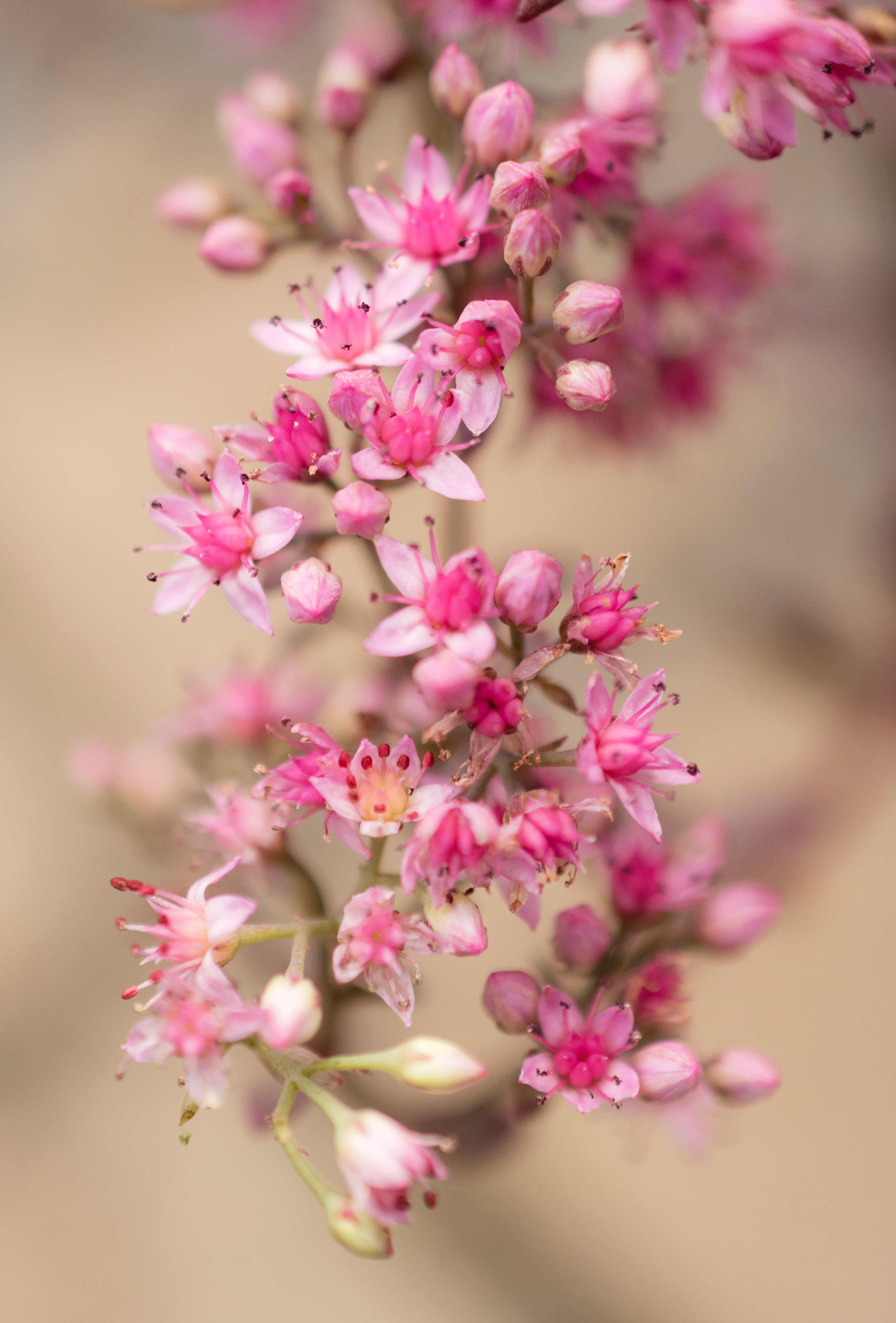 Selective Focus Photography Of Pink Milkweed Flowers