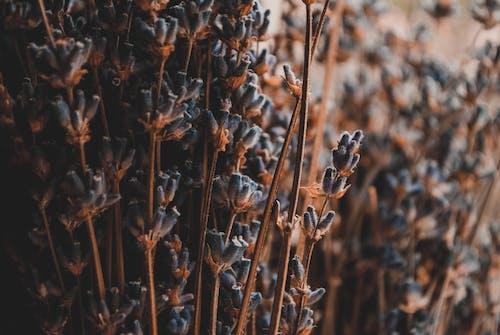 Бесплатное стоковое фото с окружающая среда, природа, пурпурный, размытый фон