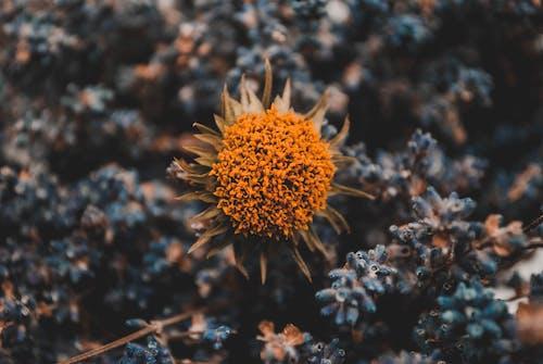 增長, 天性, 明亮, 植物 的 免费素材照片