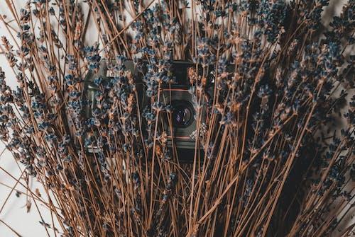 Fotos de stock gratuitas de brillante, cámara, colores, flora