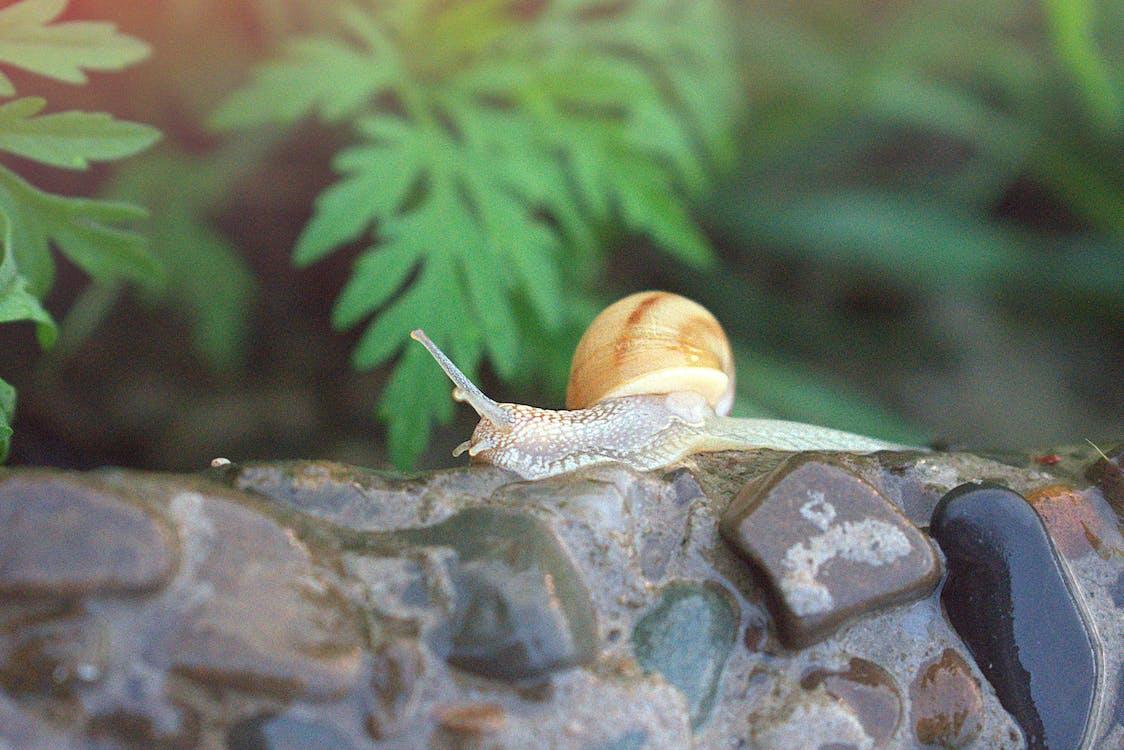 Photo Of Snail