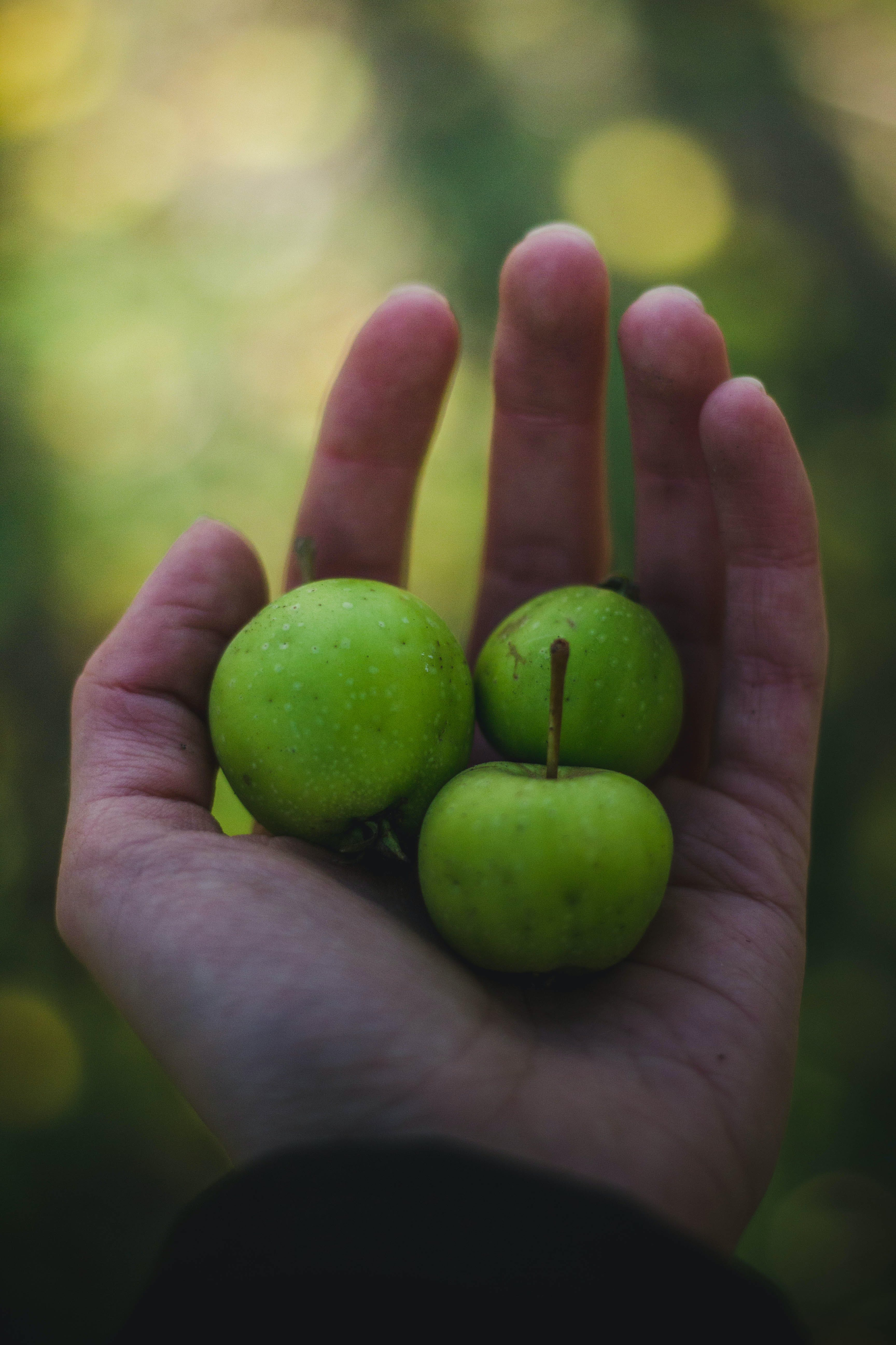 Three Round Green Fruits on Person's Left Palm