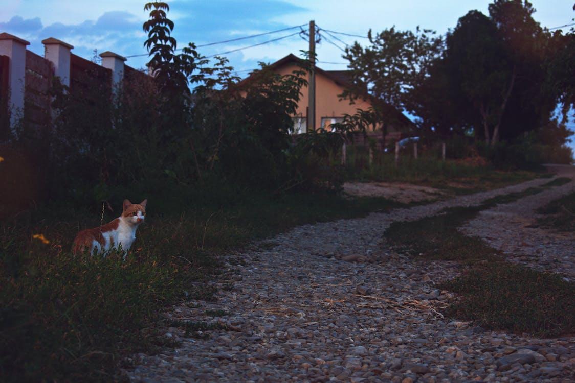 ネコ, ペット, 動物