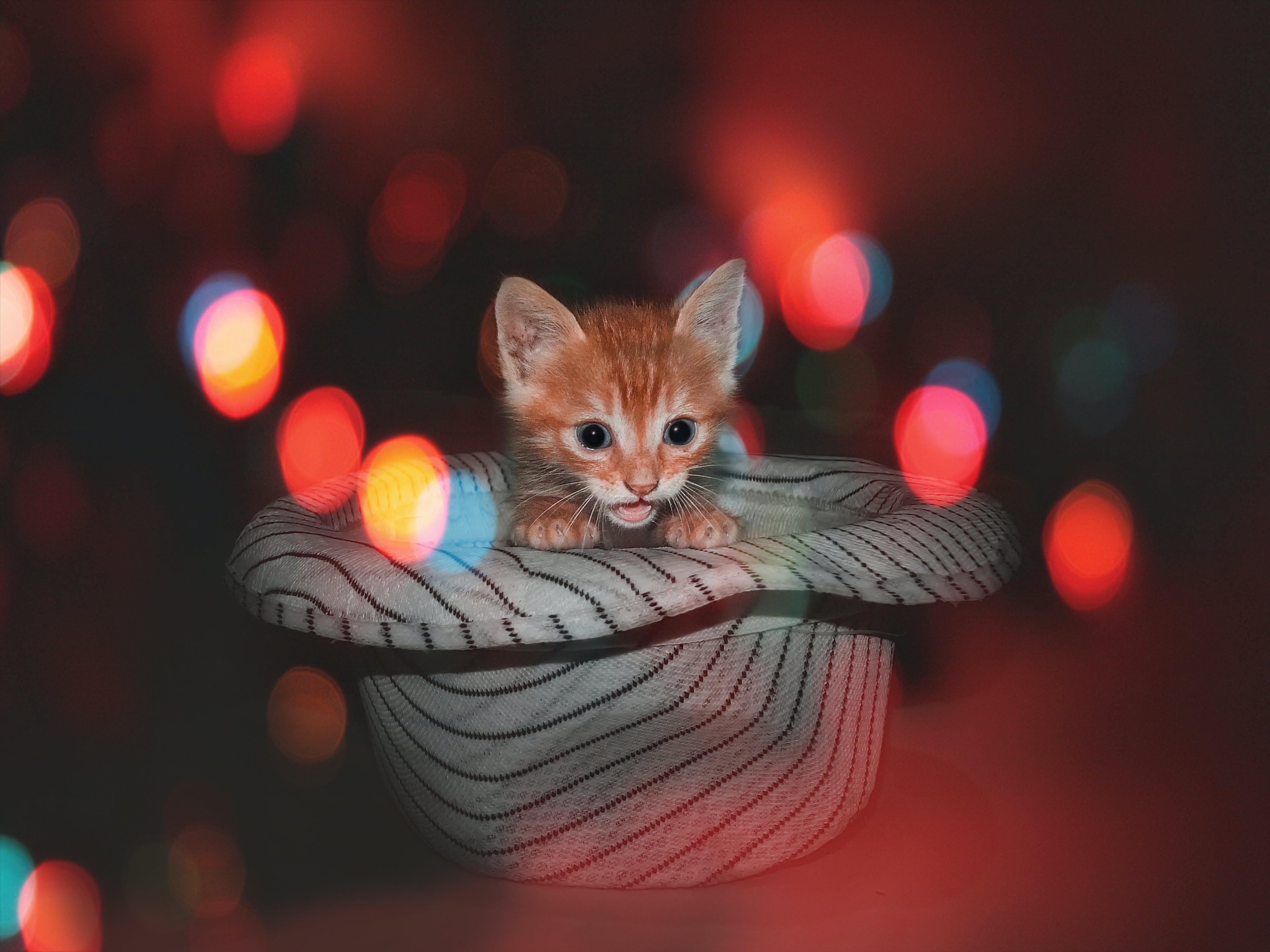 Free stock photo of animal lover, animal photography, animal portrait, cat