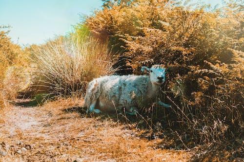 Immagine gratuita di animale, erba, fauna selvatica, mammifero