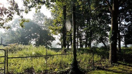 Ilmainen kuvapankkikuva tunnisteilla aamuaurinko, aamun valo, aita, hämähäkinverkko