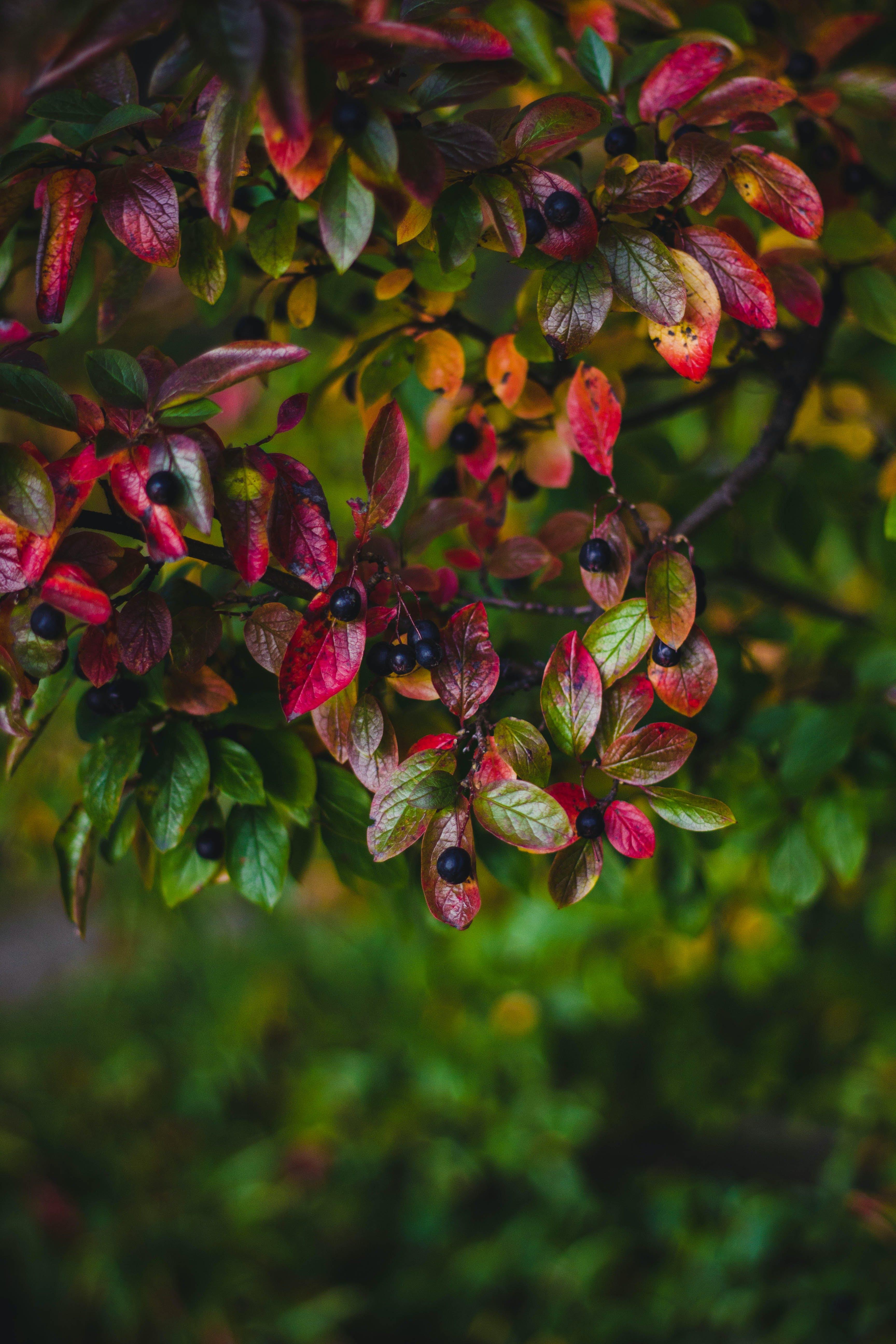 Black Berry Fruits